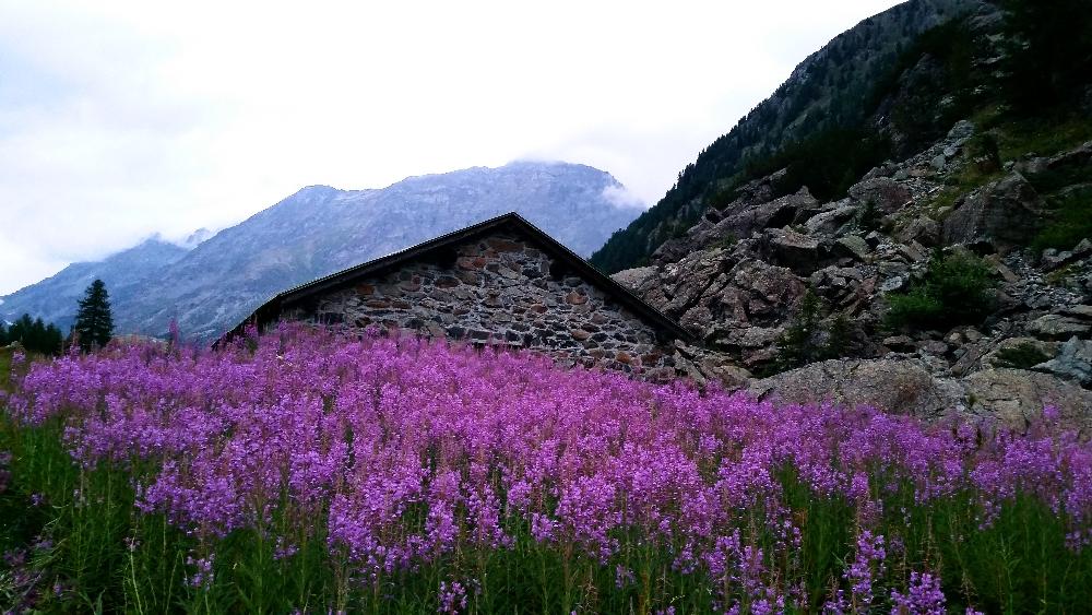 Alpe Ventina