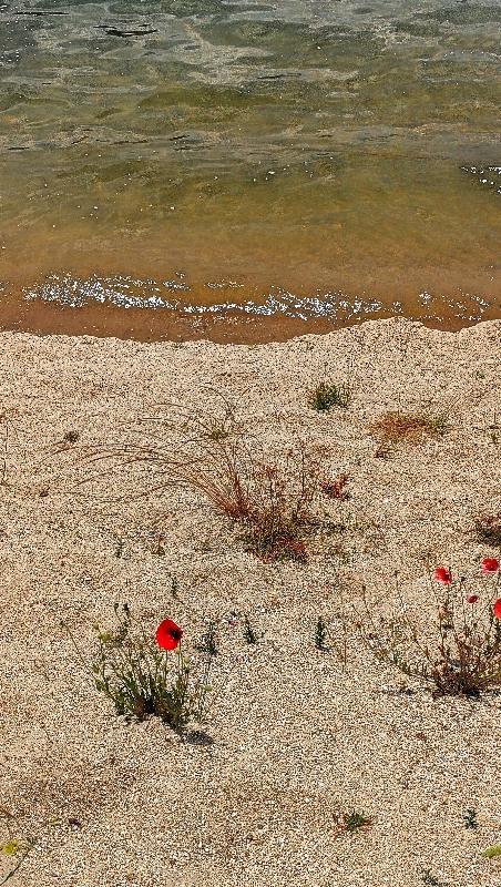 parco-nazionale-della-sila