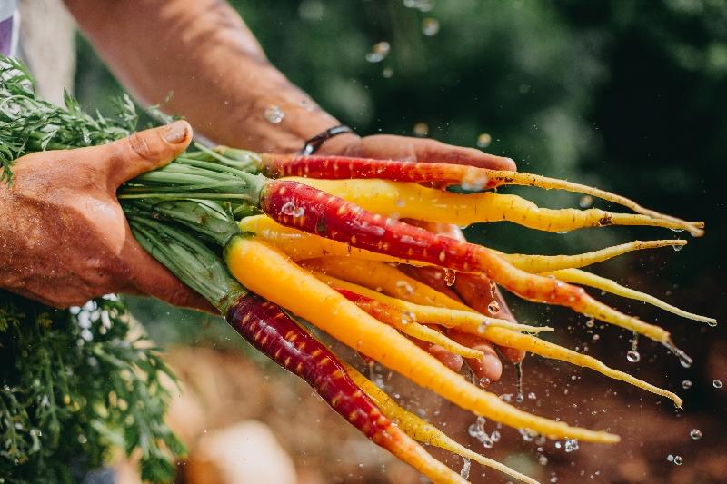 carota di polignano