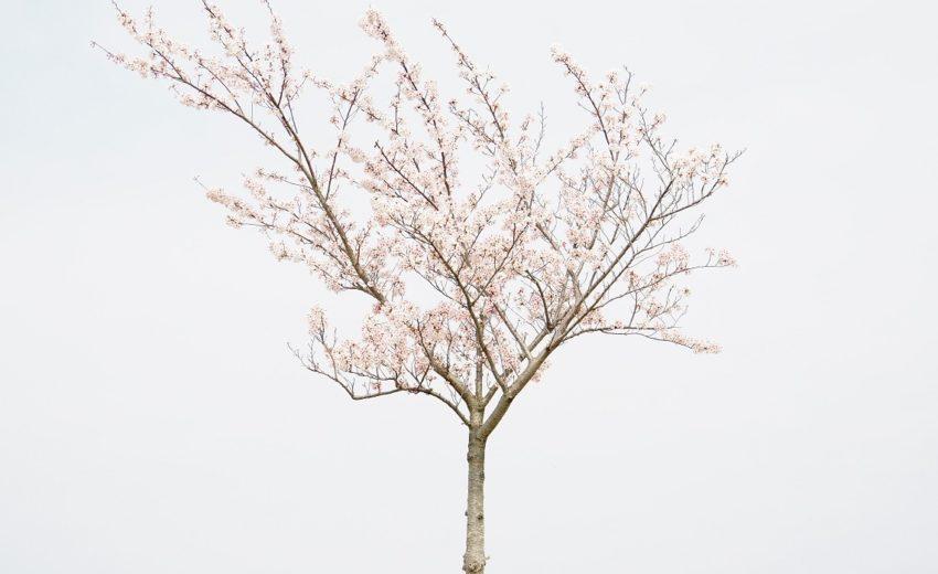 primavera_fioritura