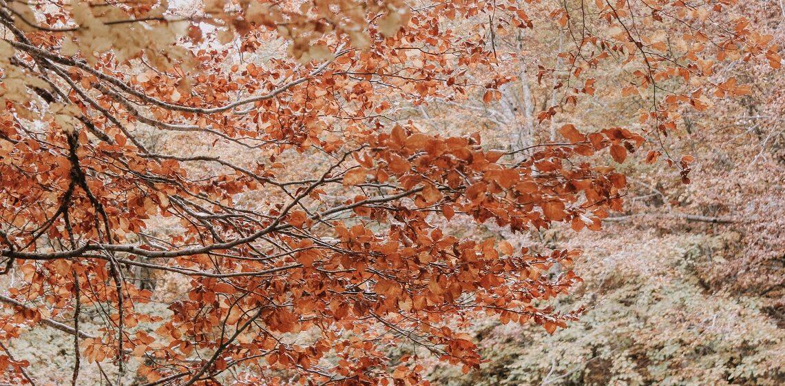 Foliage_autunno_Italia